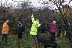 allington-green-apple-tree-pruning-001