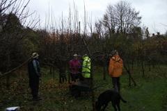 allington-green-apple-tree-pruning-005