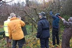 allington-green-apple-tree-pruning-007