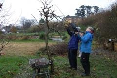 allington-green-apple-tree-pruning-008