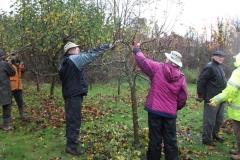 allington-green-apple-tree-pruning-010
