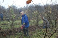ightham-mote-cobnut-pruning-001