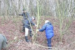 cobnut-pruning-workshop-allington-006