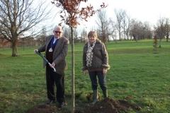 swanley-park-future-heritage-tree-001