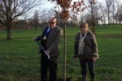 swanley-park-future-heritage-tree-002