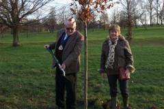 swanley-park-future-heritage-tree-003