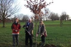 swanley-park-future-heritage-tree-004