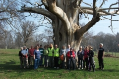 heritage-tree-surveyors-workshop-march-2012-004