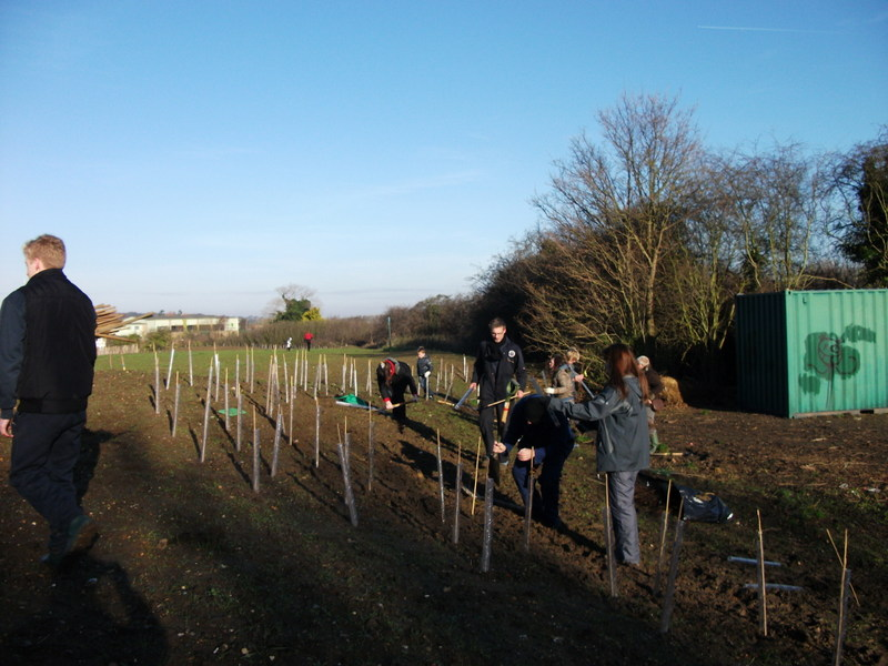 swanley-park-community-hedge-planting-003