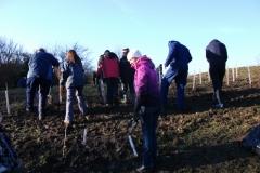 swanley-park-community-hedge-planting-001