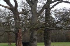 oak-bullfield-7-9