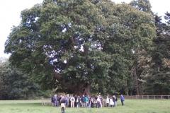 heritage-tree-surveyors-course-sept-2011-006