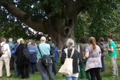 heritage-tree-surveyors-course-sept-2011-007