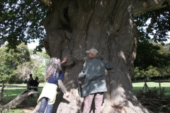 heritage-tree-surveyors-course-sept-2011-008