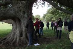 heritage-tree-surveyors-course-sept-2011-013