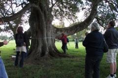 heritage-tree-surveyors-course-sept-2011-014
