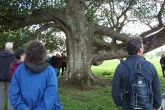 heritage-tree-surveyors-course-sept-2011-015
