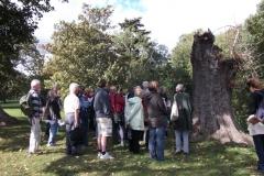 heritage-tree-surveyors-course-sept-2011-022