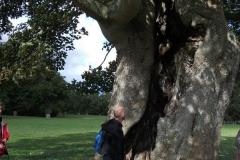 heritage-tree-surveyors-course-sept-2011-027