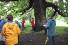 mote-park-guided-walk-june-2012-077