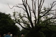 mote-park-guided-walk-june-2012-082