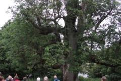 mote-park-guided-walk-june-2012-084