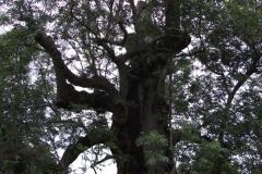 mote-park-guided-walk-june-2012-085
