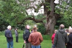 mote-park-guided-walk-june-2012-086