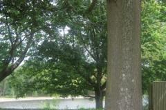 Reichwald-Forest-War-Graves-Oak