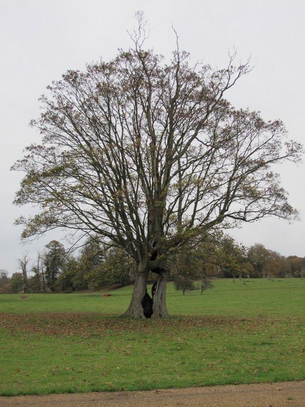 how to become a tree surveyor