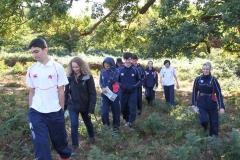 Knole-park-tree-trail