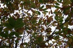 photo-12-11-2011-15-58-31