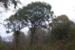 photo-12-11-2011-16-01-13