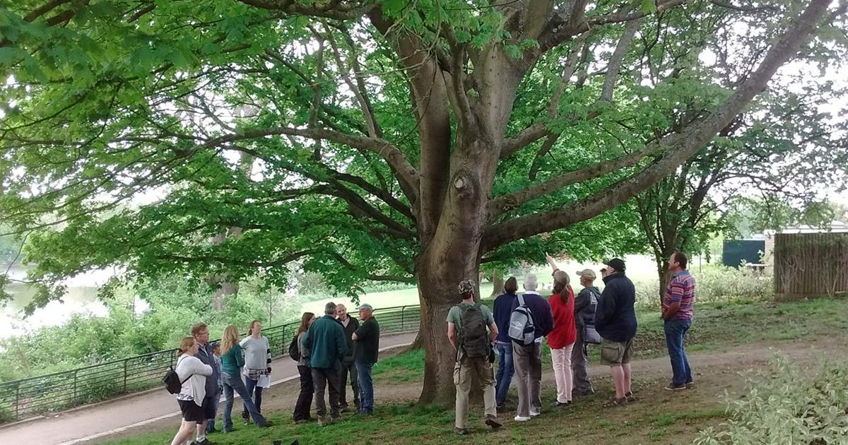 People looking at a heritage tree in Kent