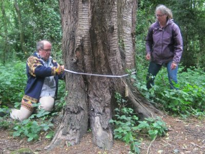People measuring a heritage tree
