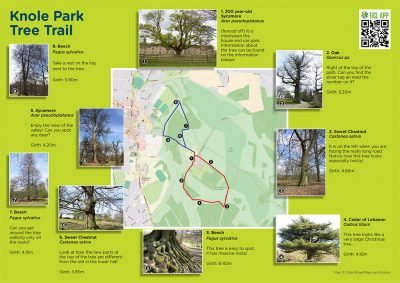 Screenshot of Knole Park tree trail leaflet