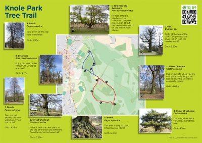 Screenshot of Knole Park tree trail leaflet